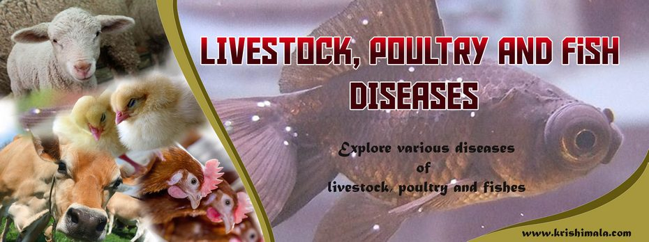 Livestock_Poultry_and_Fish_Diseases_Catalogue_Final_New.jpg