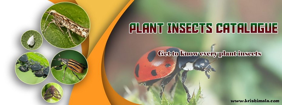 Plant_Insects_Catalogue_Final_New.jpg