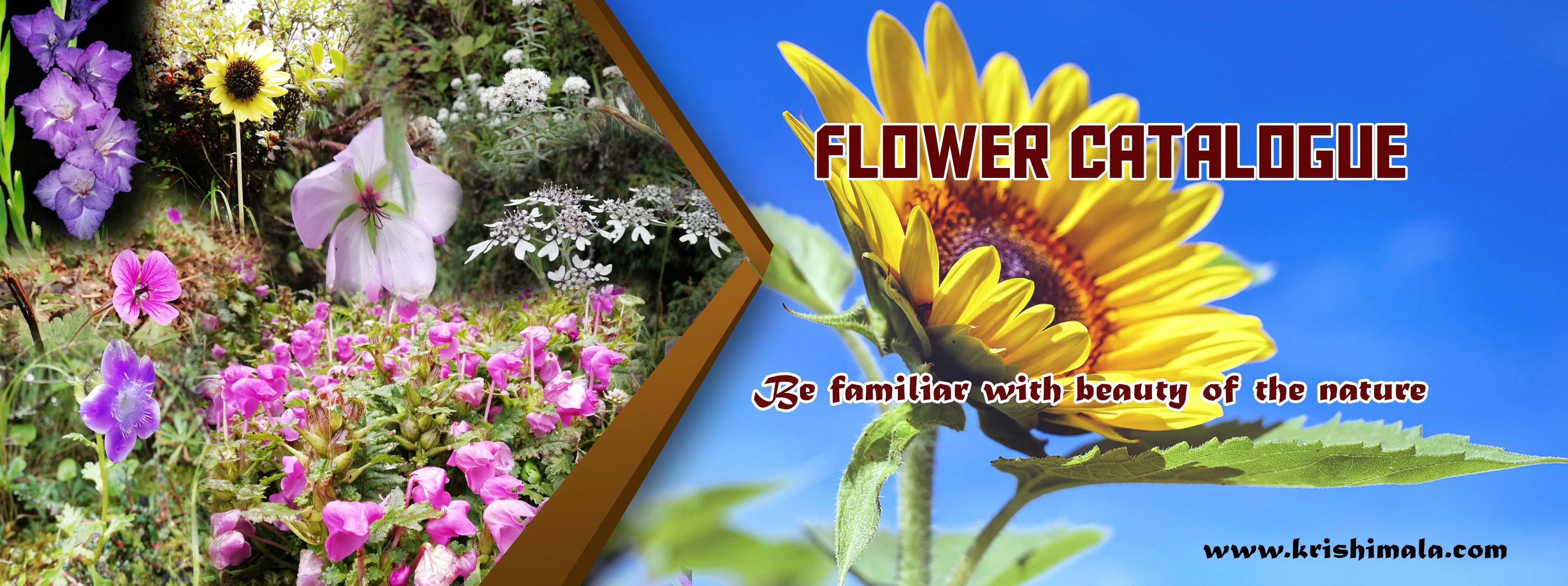 flower catalogue.jpg
