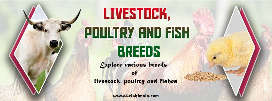 Livestock_Poultry_and_Fish_Breeds_Catalogue_Final_New.jpg