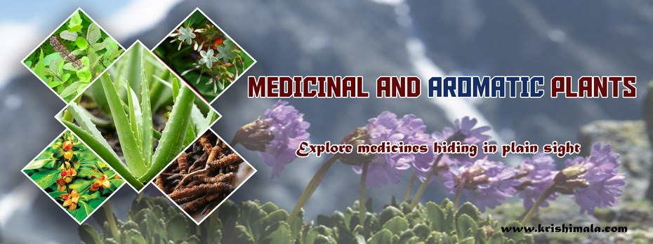 Medicinal_and_Aromatic_Plants_Catalogue_Final_New.jpg