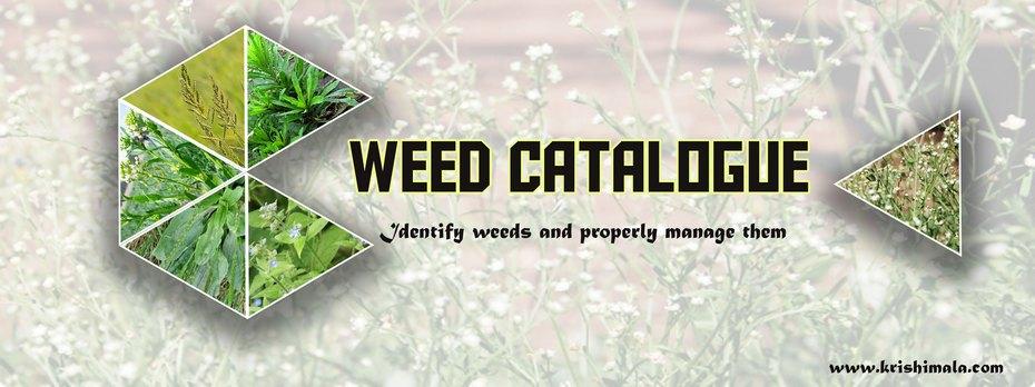 Weed_Catalogue_Final_New.jpg